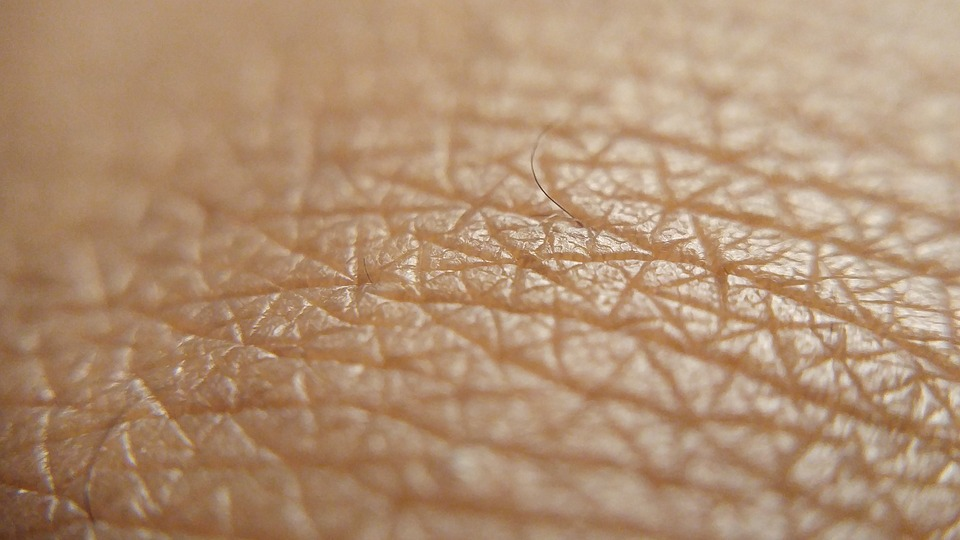 A picture of the epidermal layer of the human body. It can easily be treated with CBD cream.